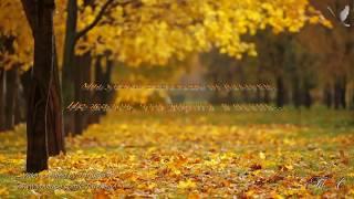 🍁  ..... не жалея, что дорога  в осень.......