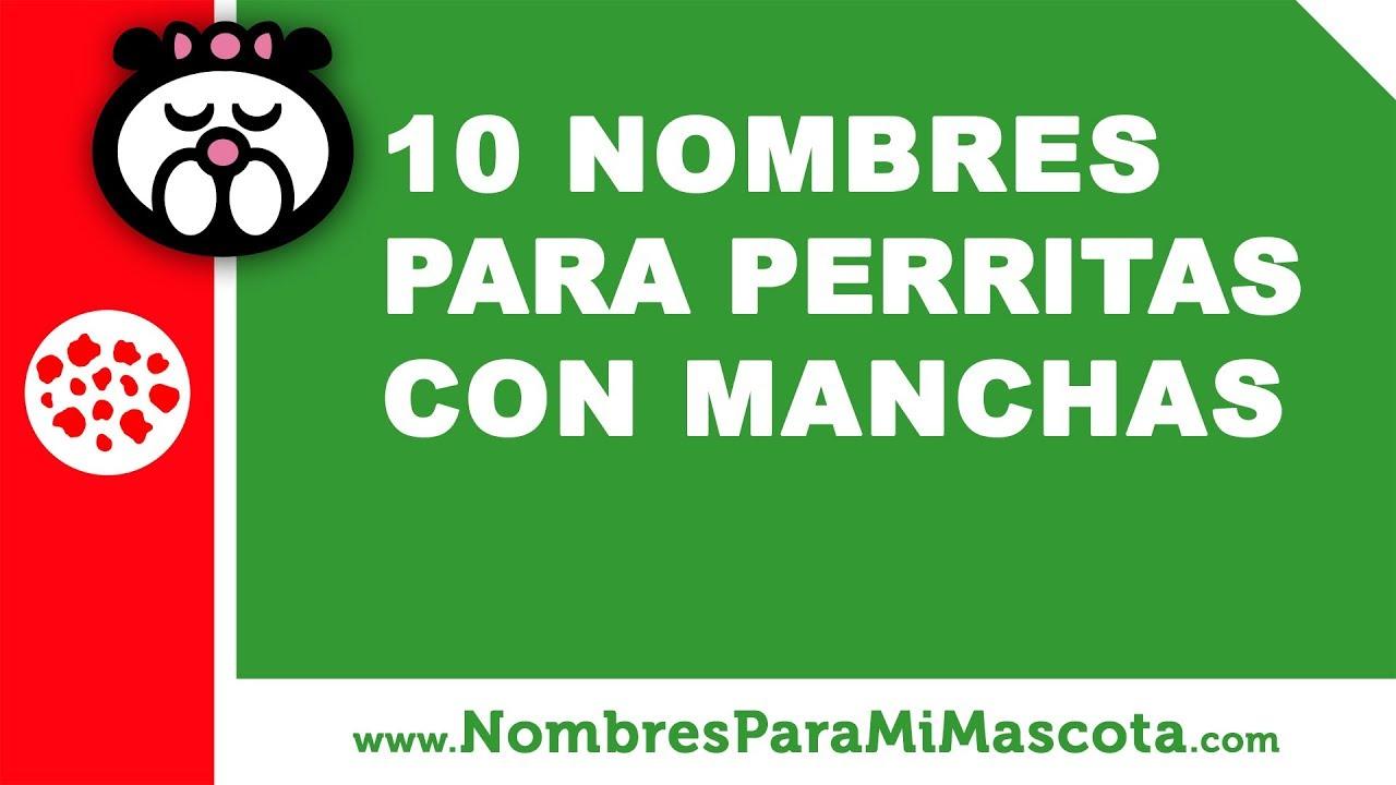 10 nombres para perritas con manchas - nombres de mascotas - www.nombresparamimascota.com