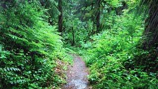 Rainy Day Pacific Northwest | Rain Sounds for Sleeping, Studying, Reading, Homework | White Noise