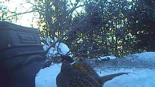 Four At Home Feeder Jan 2017