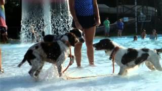 PAWS Doggy Swim 2014