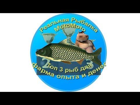 Топ 3 рыб для фарма опыта и денег [АРХИВ] | Реальная Рыбалка.
