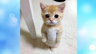 Приколы с котами и смешная озвучка животных #12 - навсегда сохранить улыбку на лице