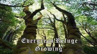 Evergreen Refuge - Growing (Full Album)