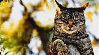 Приколы с котами - Смешные кошки.Приколы с хомяками.Топовая подборка приколов с разными зверушками