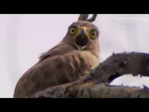 Dramatic Eagle!