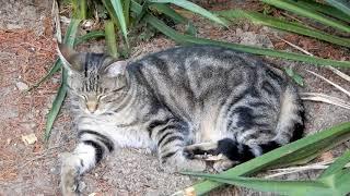 Katze Mimi – Relaxing im Garten