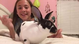 Showing you all my pets!!!👍🏻🐶🐱🐹🐰🐸