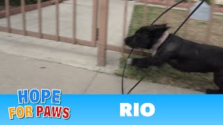 Download Youtube: Abandoned dog gets hit by a car and then tries to escape from rescuers!