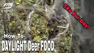 How To Feed Deer
