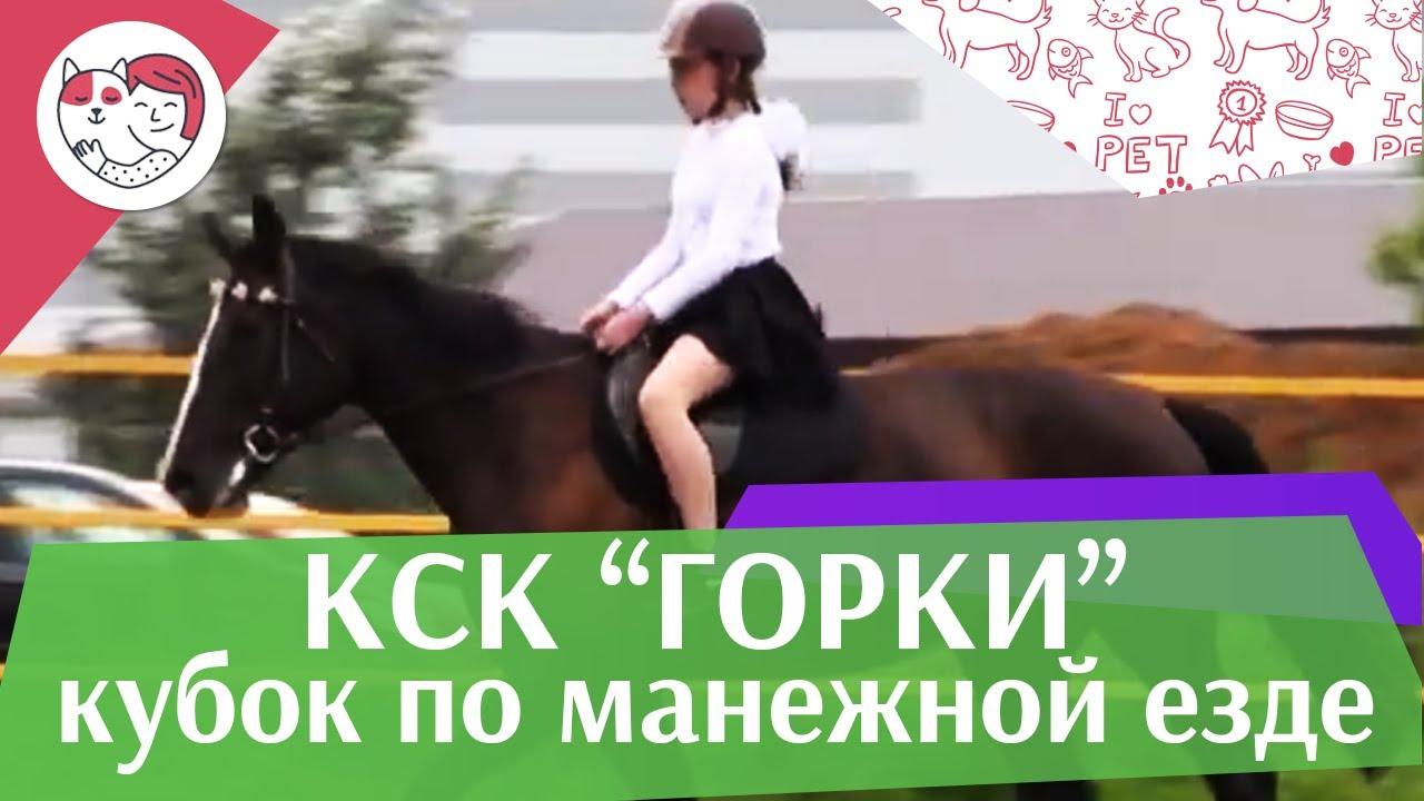 Летний кубок КСК Горки по манежной езде КЮР часть 13 на ilikepet