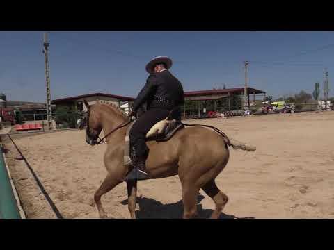 Equitación de Trabajo 280821 Video Doma 5