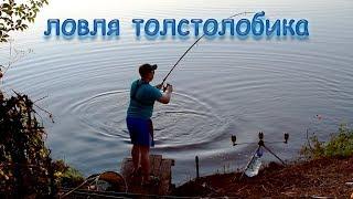 Рыбалка с ночёвкой. Ловля толстолобика на техноплактон.