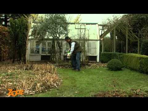 liminer la mousse dans la pelouse. Black Bedroom Furniture Sets. Home Design Ideas