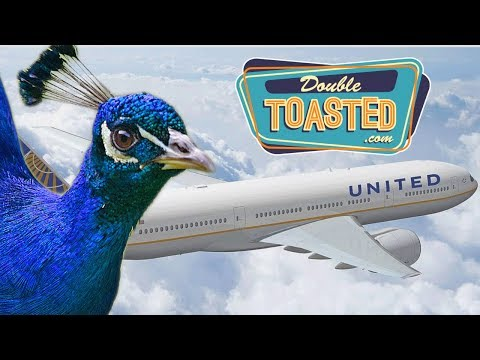 PEACOCK DENIED FLIGHT ON UNITED AIRLINES