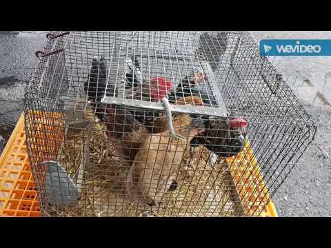 Mercato animali Seveso 2017
