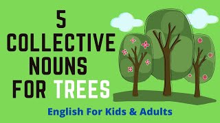 5 Collective Nouns For Trees