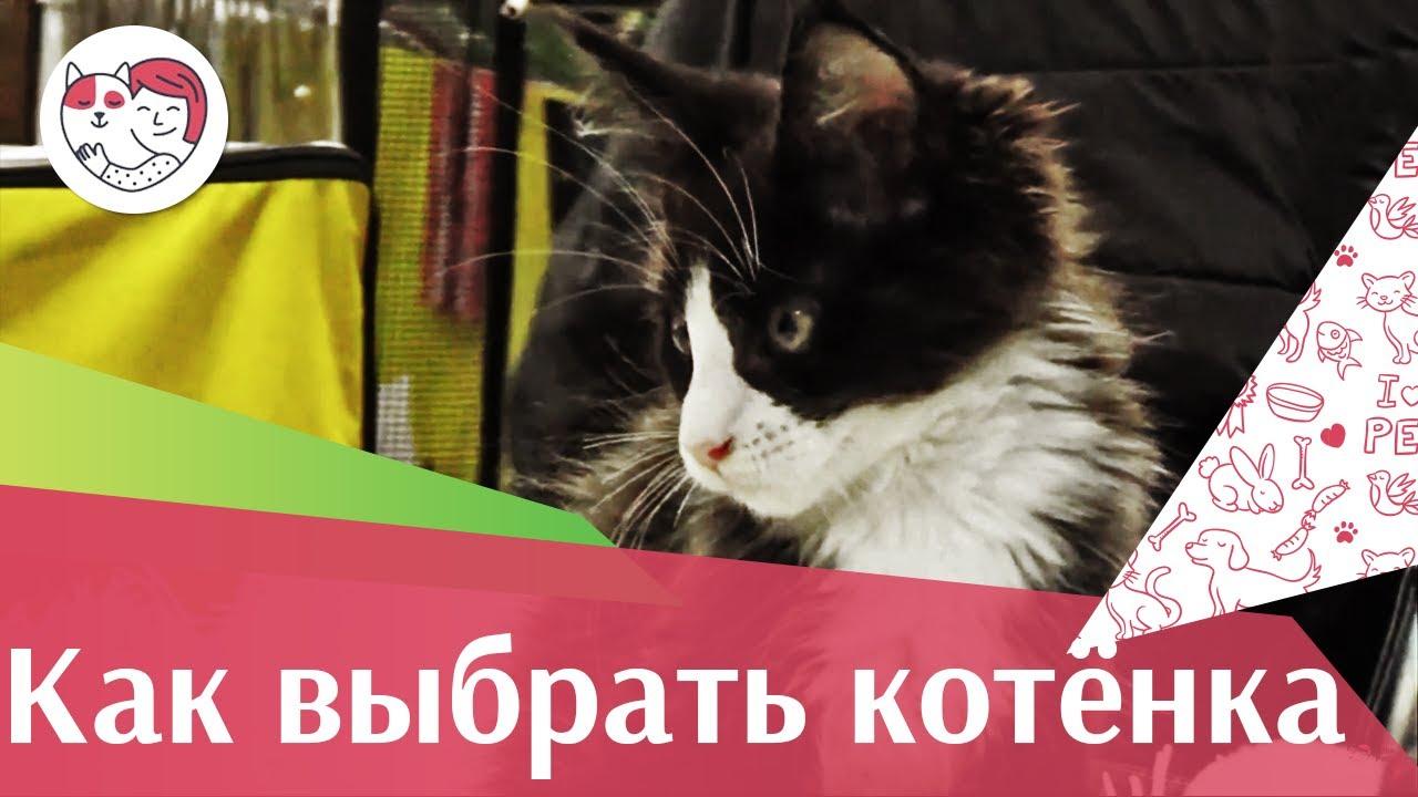 Как выбрать котенка? Правила и советы