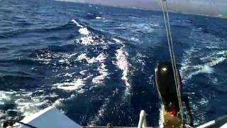preview picture of video 'Sailing Crikvenica / Croatia'