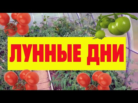 Когда сажать помидоры на рассаду в 2020 году по Лунному календарю для теплицы
