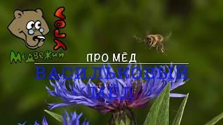 Про МЁД - васильковый мёд