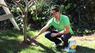 How to Get Your Fruit Trees to Bear Fruit Again