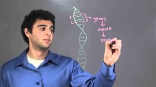 Information Stored Within a DNA Molecule : Biology & DNA