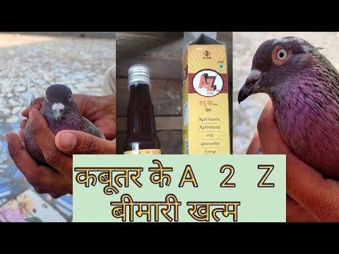 , title : 'Multivitamins For Pigeons || कबूतर के A - 2 - Z बीमारी खत्म || Kabutar ilaj || Kabootar Medicine ||