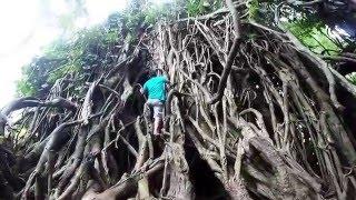 Balete Millenium Tree