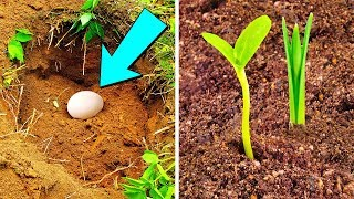 Put An Egg In Your Garden, and See What Happens Later