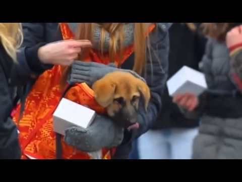 Woman Gets A Surprise When She Tries To Pet A Dog                          Hi Puppy...