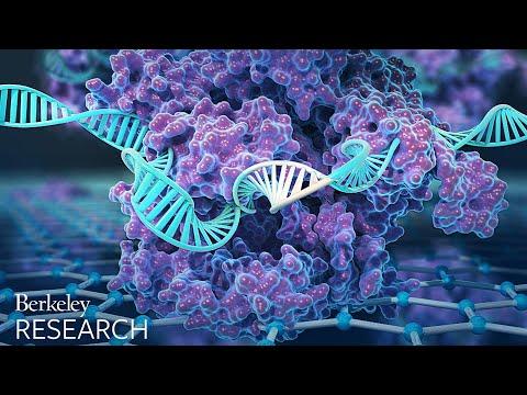 Detecting Genetic Mutations with CRISPR
