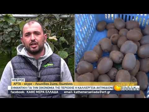 Ήπειρος: Σημαντική για την περιοχή η καλλιέργεια του ακτινιδίου | 18/11/2020 | ΕΡΤ