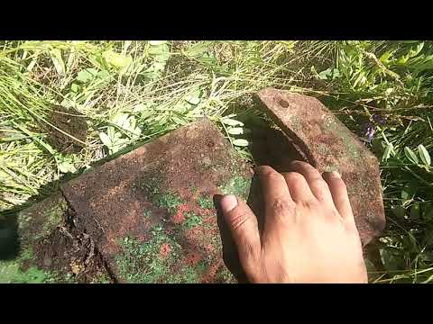 Металлокоп/Дикая и прекрасная природа/День покатушек