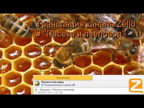 """Трансляция канала Zello """"Пасека и пчеловод"""". (Обзор за день) 17/04/2019"""
