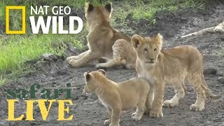 Safari Live - Day 91 | Nat Geo Wild