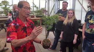 When to start shaping bonsai