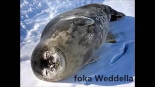 Fauna i flora Antarktydy #1