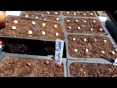 , title : '10 Great Fall Garden Vegetables & Starting a Fall Garden in Seed Flats:  Key Tips & Cautions (1of2)