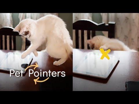 אוסף חמוד ומצחיק של פספוסי חיות שפוגשות גאדג'טים שונים