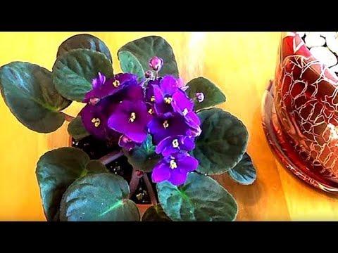 10 эффективных способов избавиться от мошек в цветочных горшках. Комнатные растения.