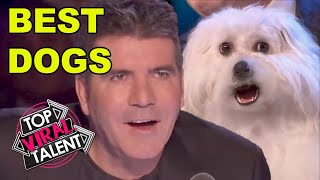 BEST DOG ACTS on Got Talent EVER!!!