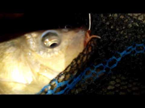 Video che riporta su pesca