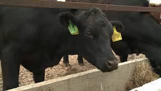 Новые технологии в животноводстве, разведение племенного скота и приближающаяся уборочная кампания