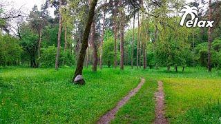 Звуки Природы - Лес - 2 часа Сна или Релакса на Природе