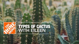 Types of Cactus with Eileen | Indoor House Plants | The Home Depot