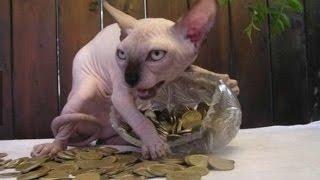 25 Funniest Cat Photos