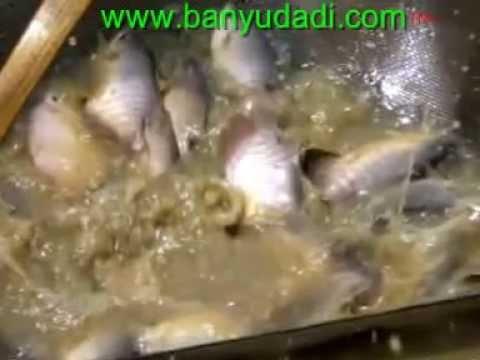 Video Cara Budidaya Ikan Gurami Lengkap