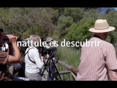 Videos from Nattule