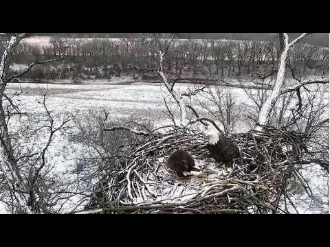 Decorah Eagles - North Nest powered by EXPLORE.org 12-24-2017.webm